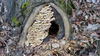 Wer wohnt denn hier? - Säugetiere (Mammalia) - Das neue Naturforum
